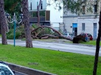 albero-viale-Italia-635x476